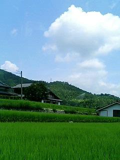 blog photo 1387.jpg